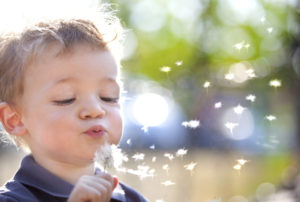 beautiful blond kid blows a dandelion outdoors mindfully